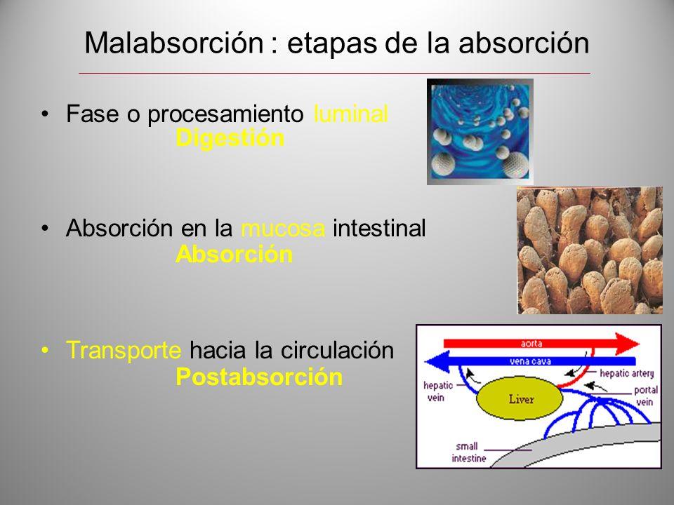 Malabsorción : etapas de la absorción