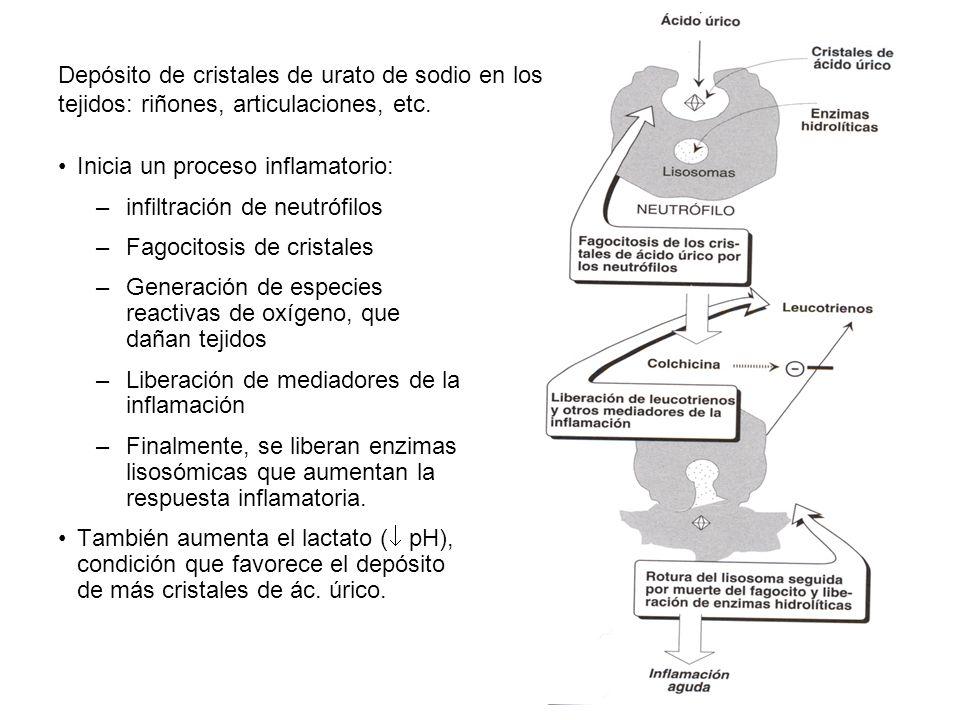 Depósito de cristales de urato de sodio en los tejidos: riñones, articulaciones, etc.