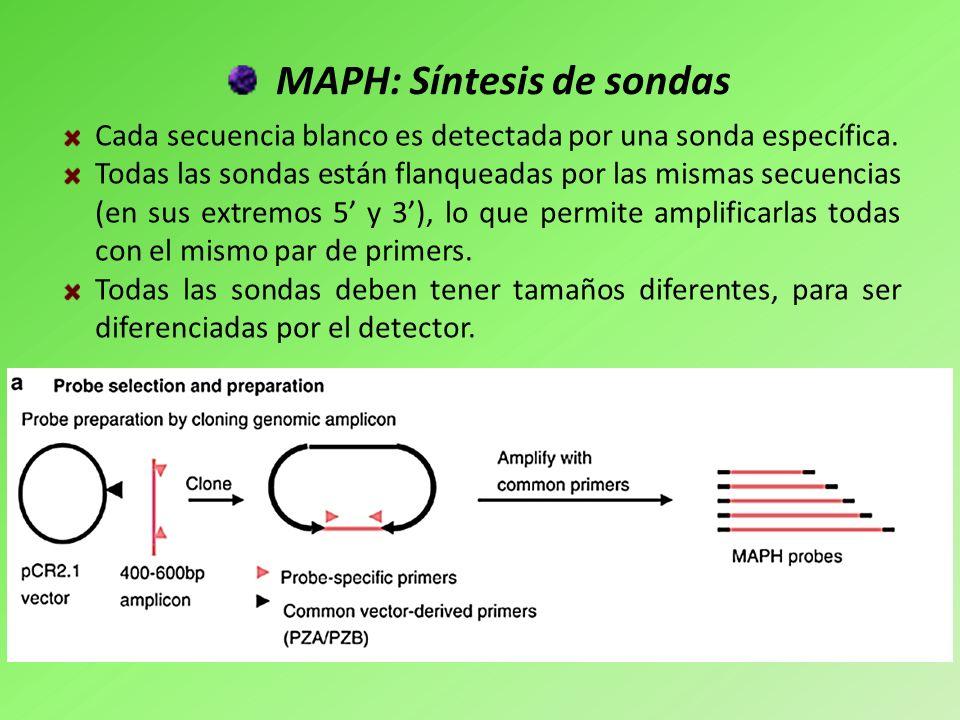 MAPH: Síntesis de sondas