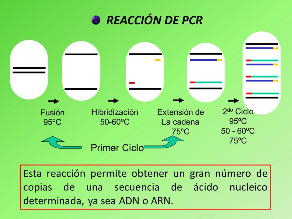REACCIÓN DE PCR Esta reacción permite obtener un gran número de copias de una secuencia de ácido nucleico determinada, ya sea ADN o ARN.