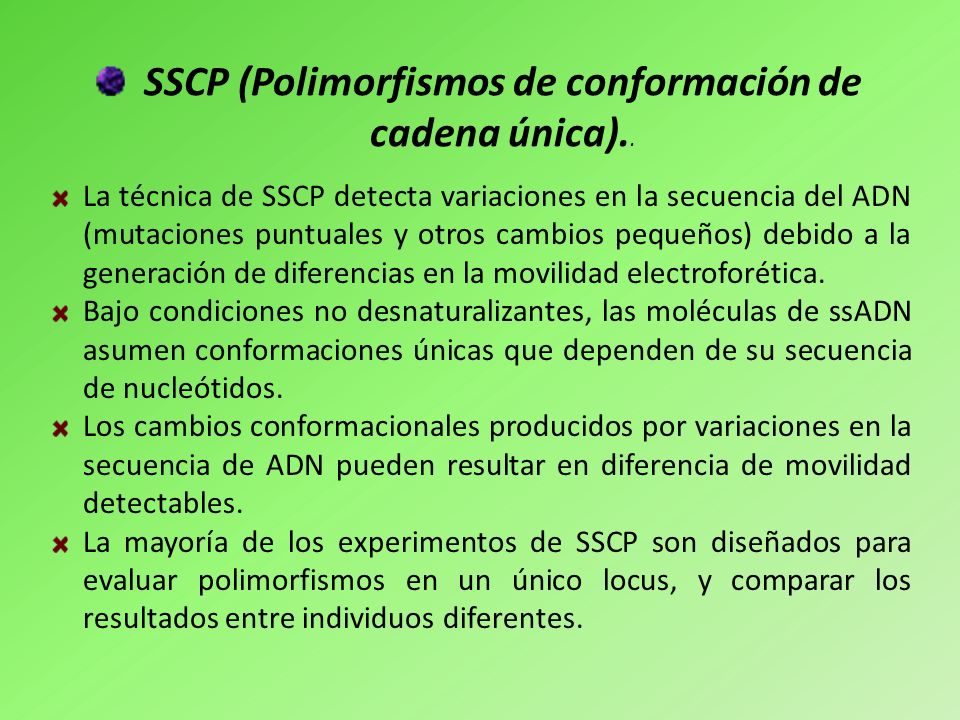 SSCP (Polimorfismos de conformación de cadena única)..