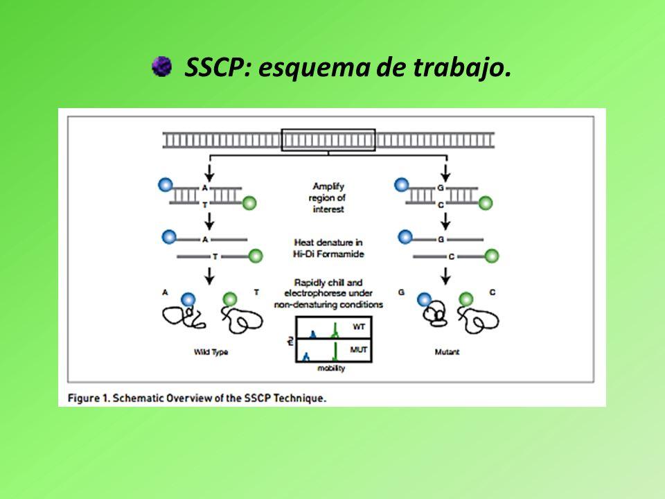 SSCP: esquema de trabajo.