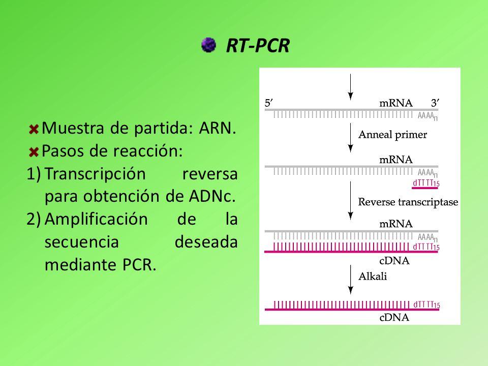 RT-PCR Muestra de partida: ARN. Pasos de reacción: