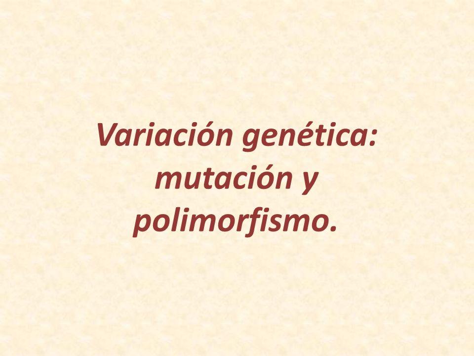 mutación y polimorfismo.