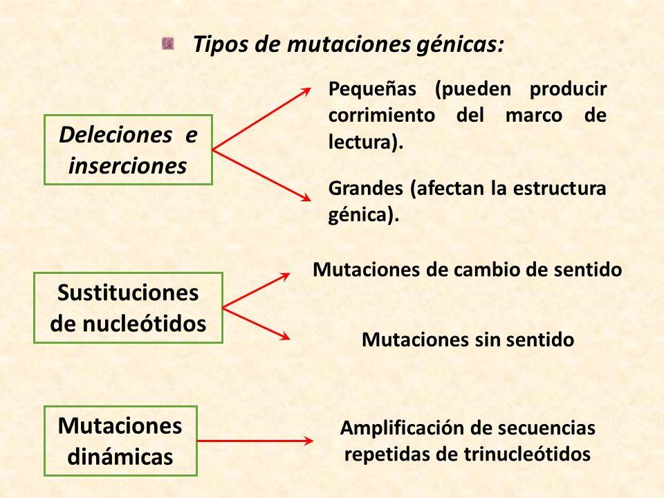 Tipos de mutaciones génicas:
