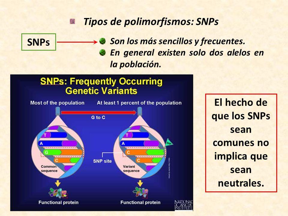 Tipos de polimorfismos: SNPs