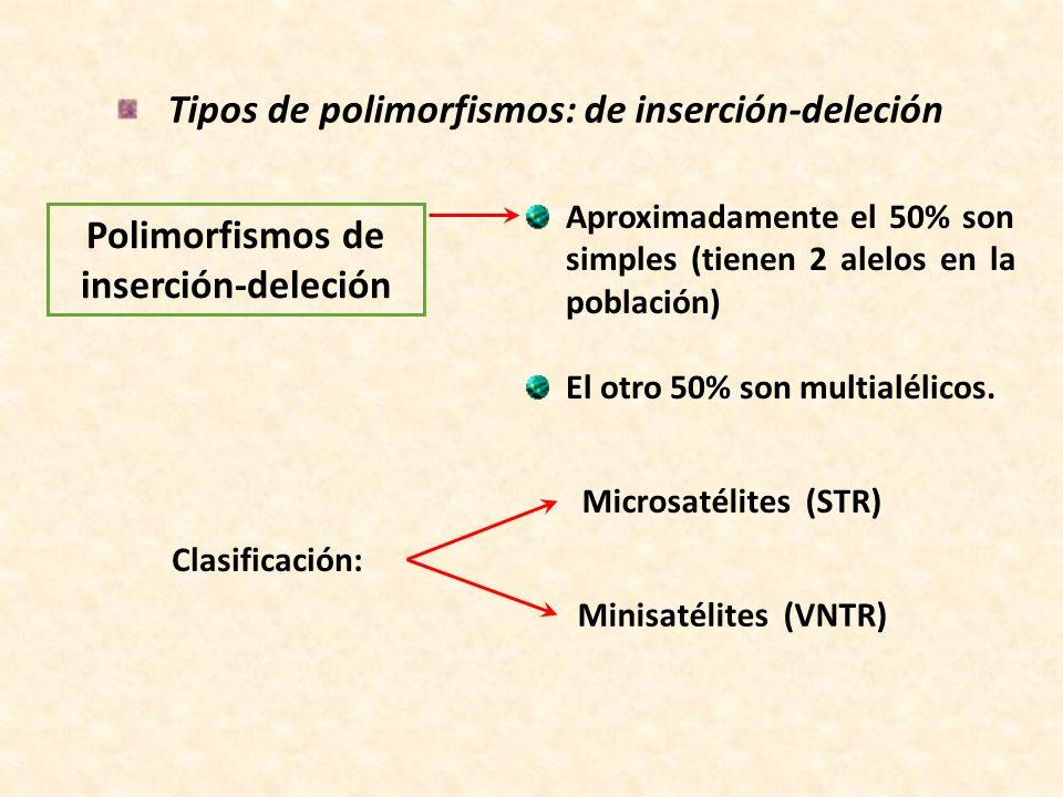 Tipos de polimorfismos: de inserción-deleción