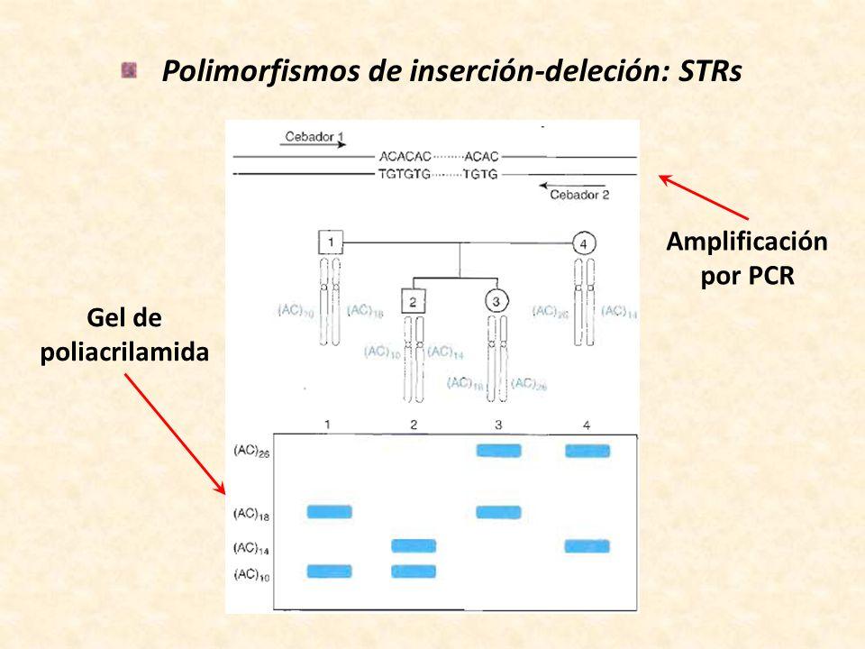 Polimorfismos de inserción-deleción: STRs