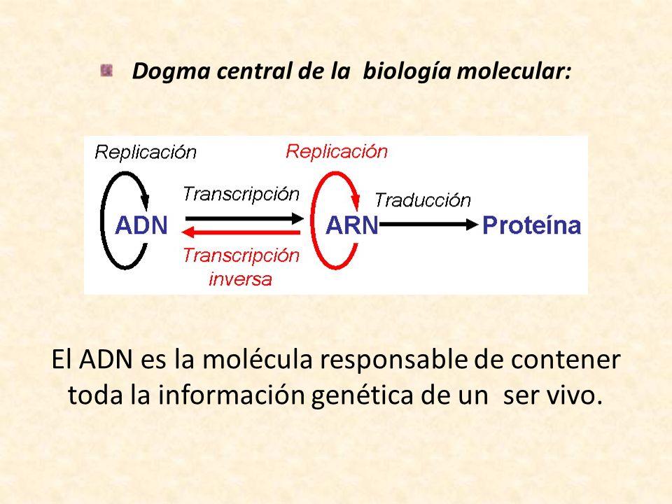 Dogma central de la biología molecular: