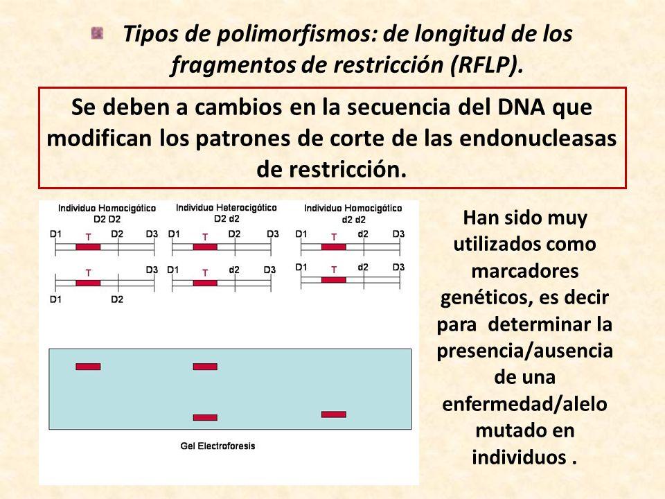 Tipos de polimorfismos: de longitud de los fragmentos de restricción (RFLP).