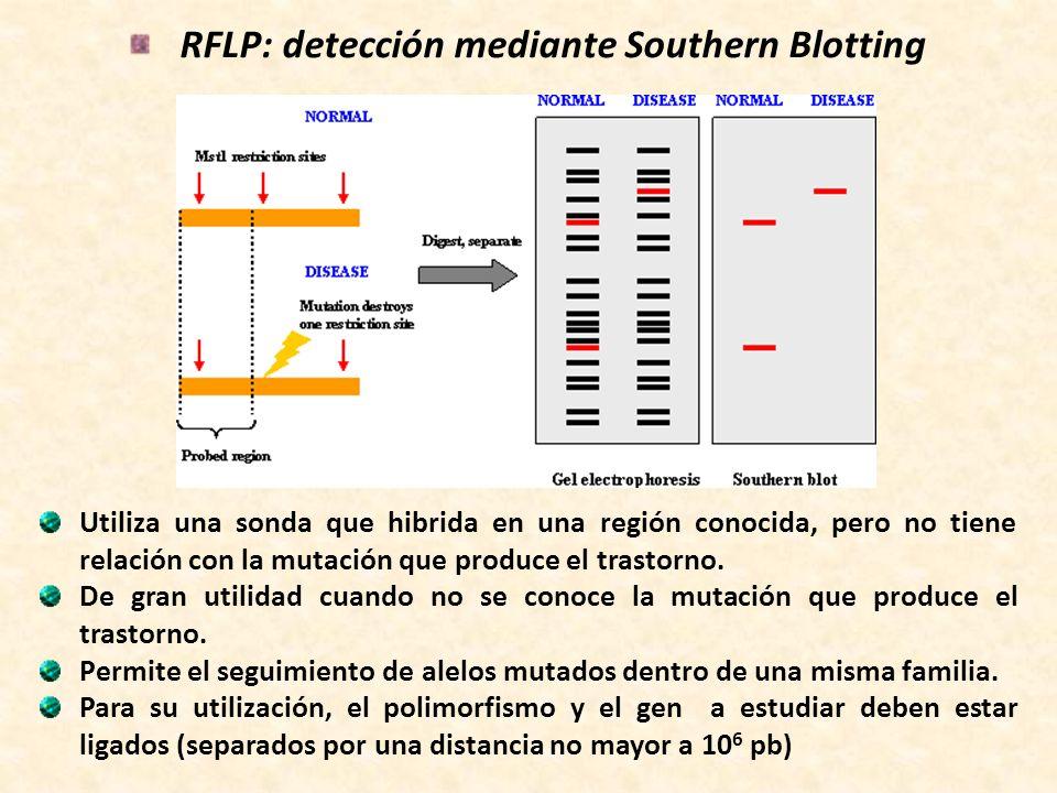 RFLP: detección mediante Southern Blotting