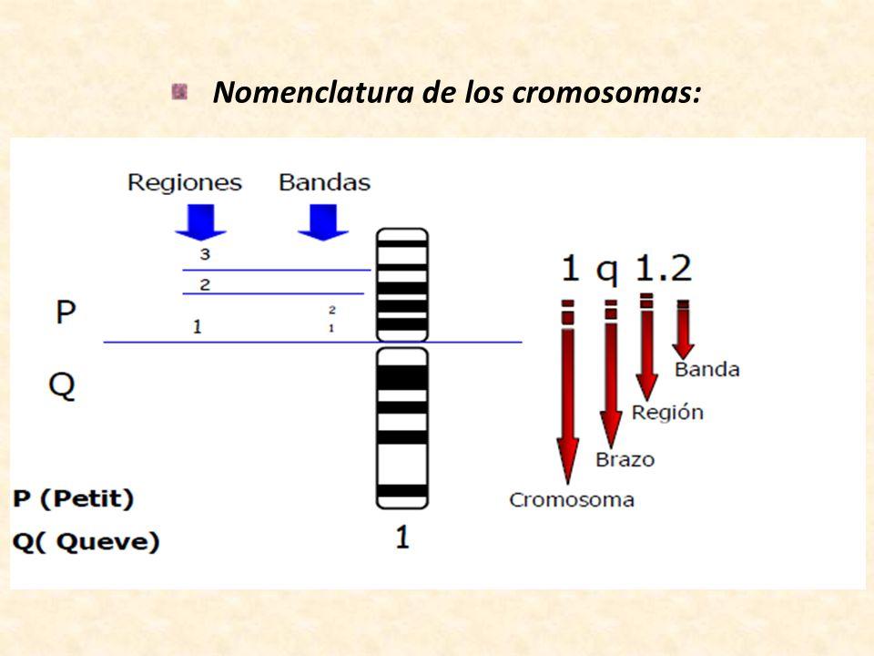 Nomenclatura de los cromosomas: