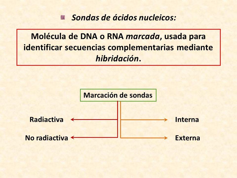 Sondas de ácidos nucleicos: