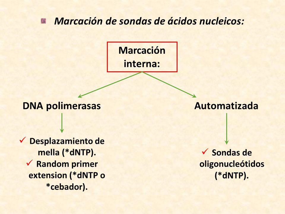Marcación de sondas de ácidos nucleicos: