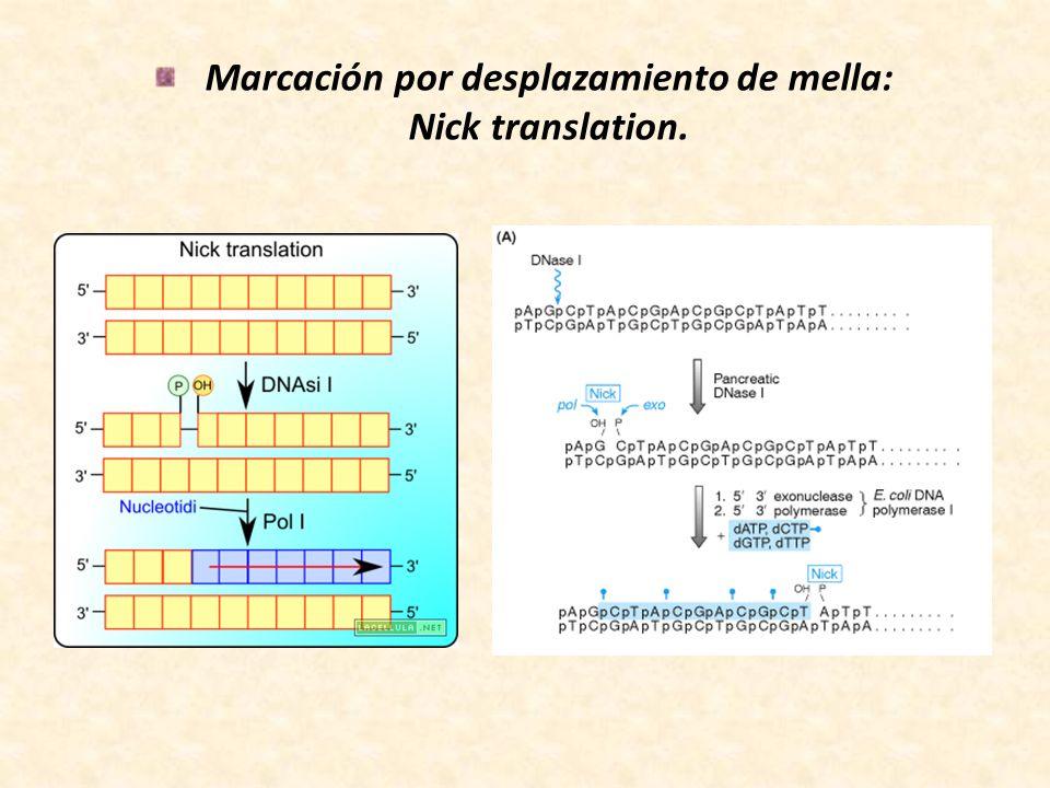 Marcación por desplazamiento de mella: Nick translation.
