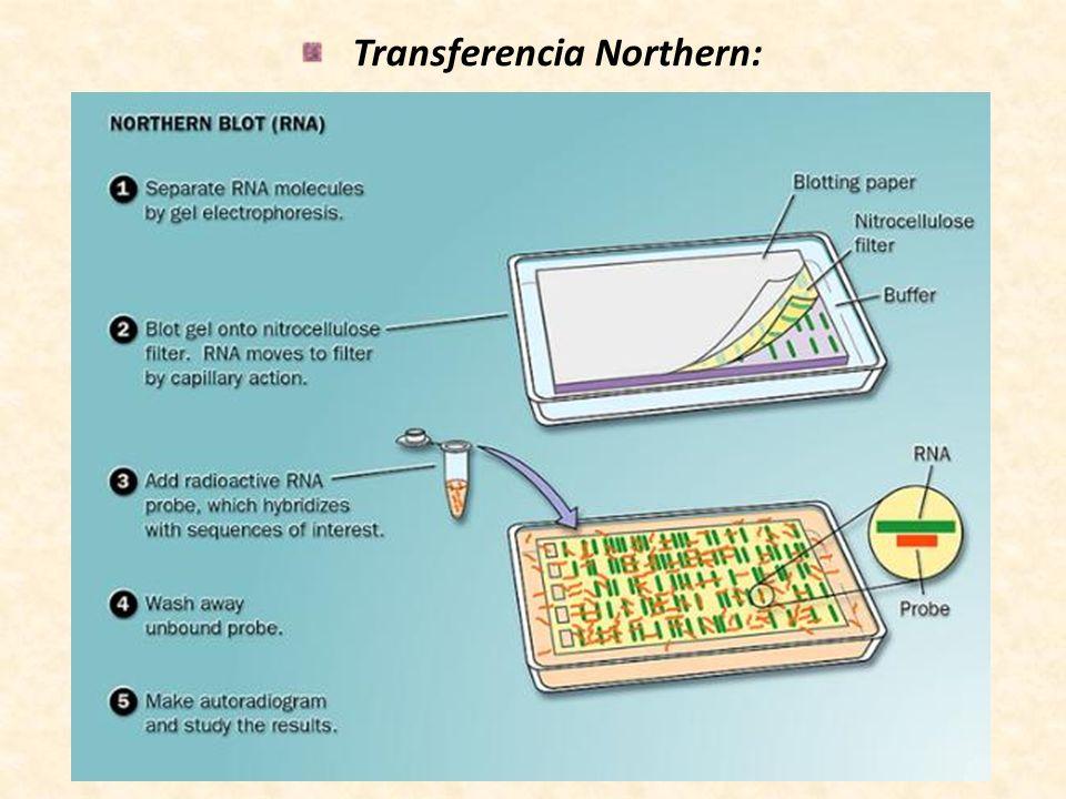 Transferencia Northern: