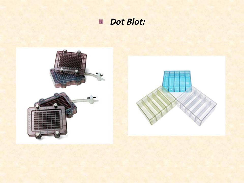 Dot Blot: