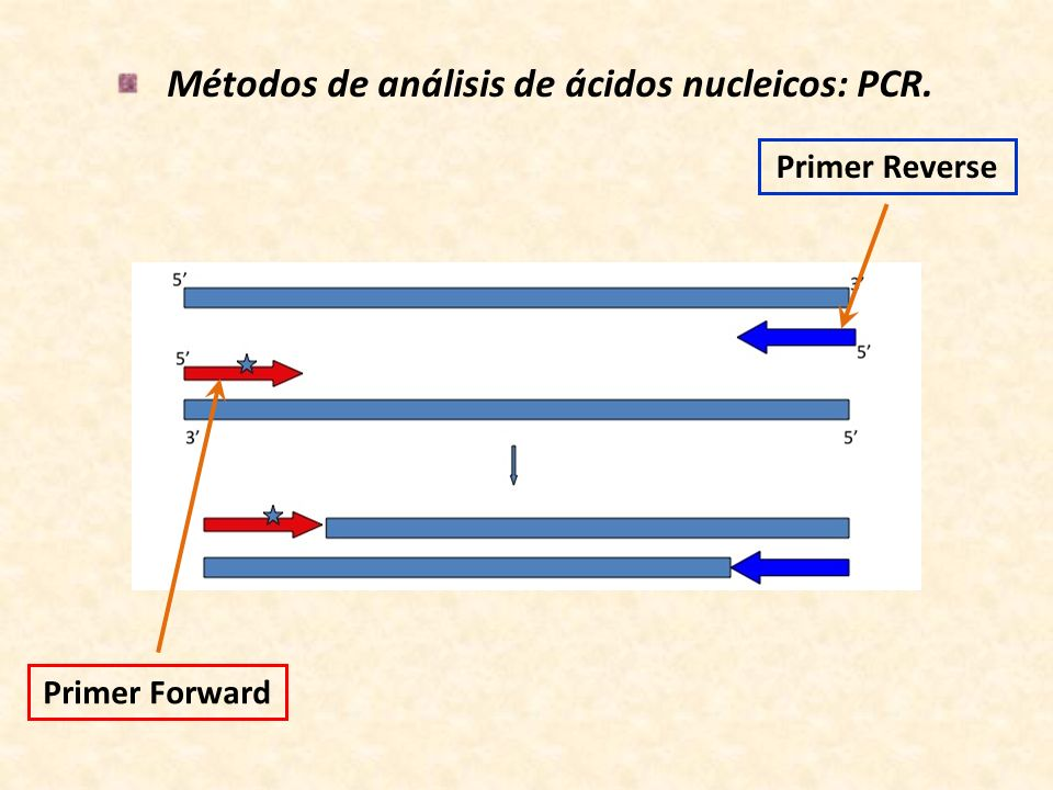 Métodos de análisis de ácidos nucleicos: PCR.