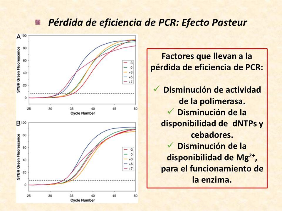 Pérdida de eficiencia de PCR: Efecto Pasteur
