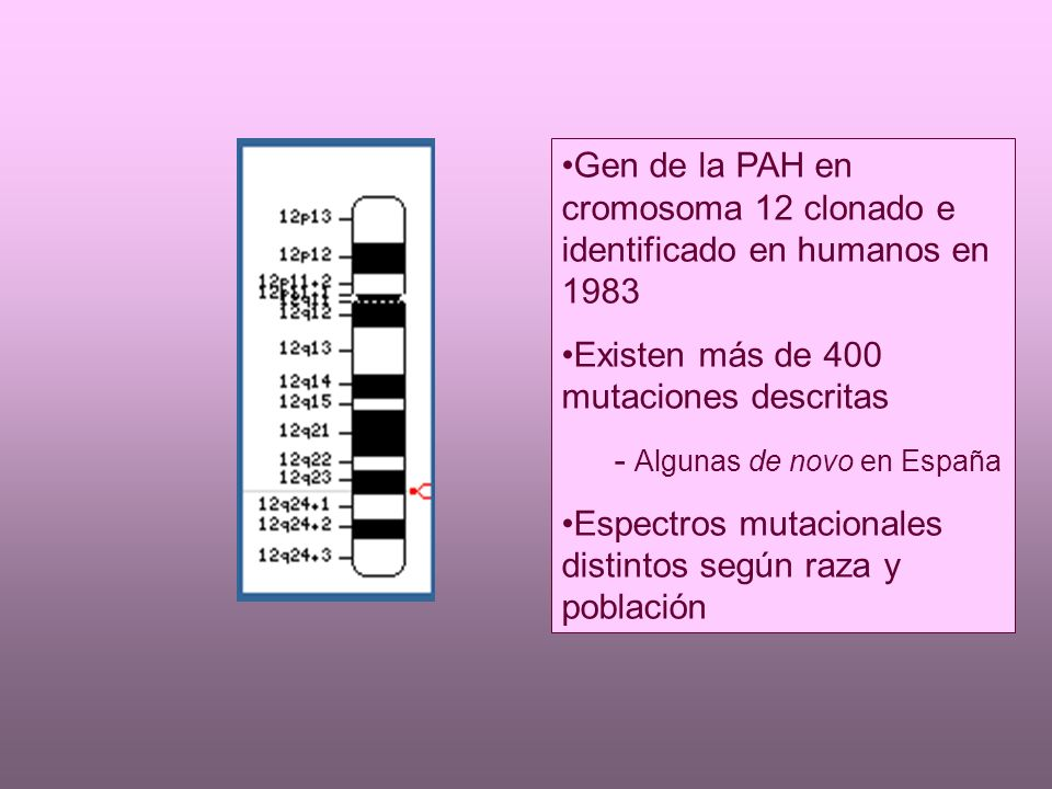 Gen de la PAH en cromosoma 12 clonado e identificado en humanos en 1983