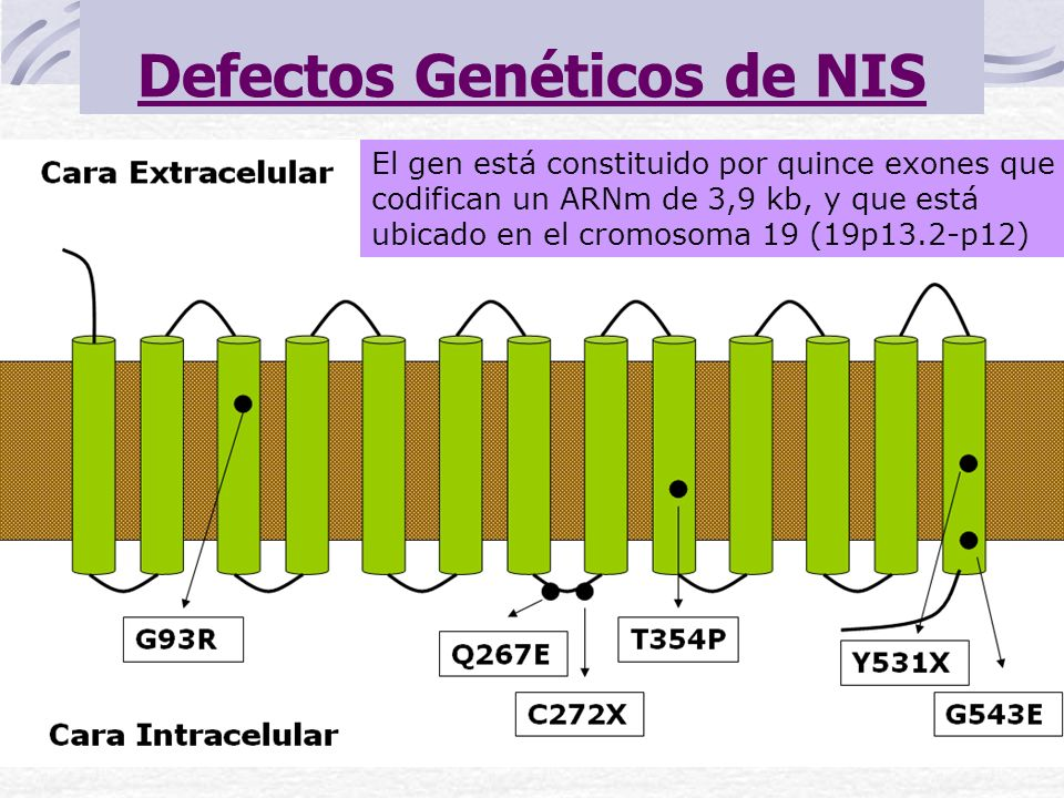 Defectos Genéticos de NIS
