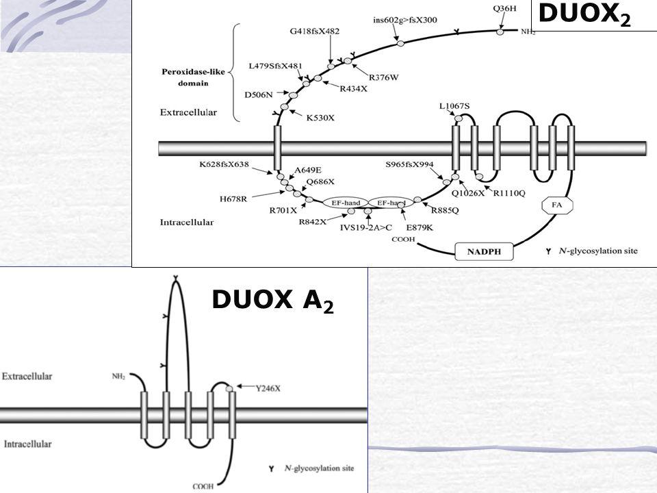 DUOX2 DUOX A2