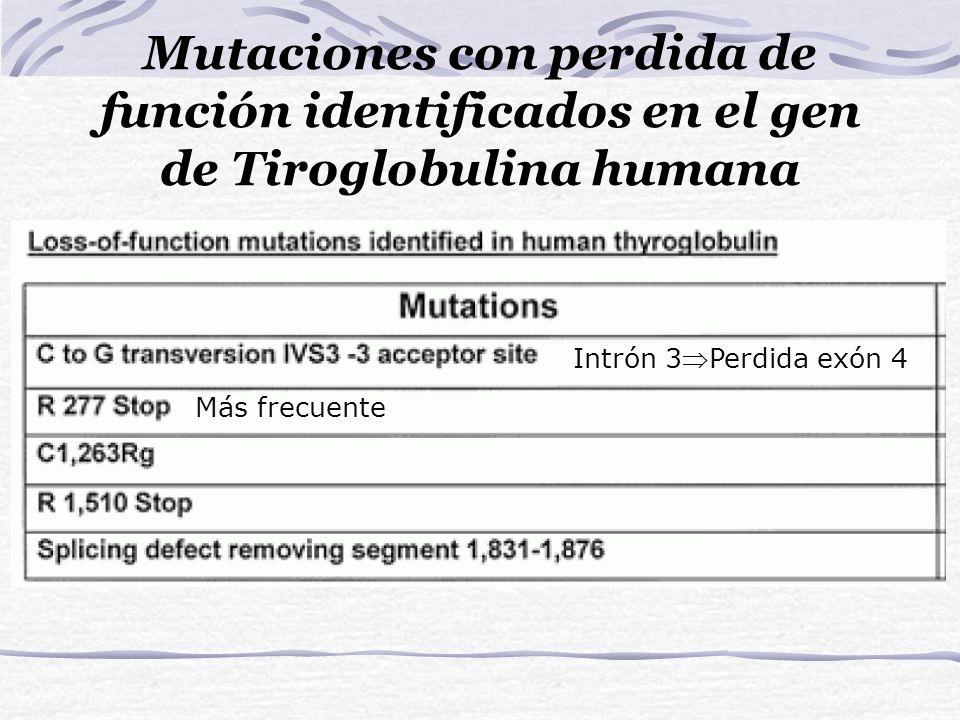 Mutaciones con perdida de función identificados en el gen de Tiroglobulina humana