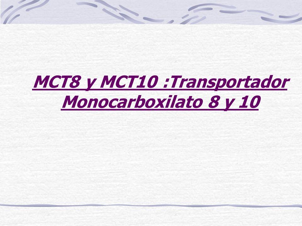 MCT8 y MCT10 :Transportador Monocarboxilato 8 y 10