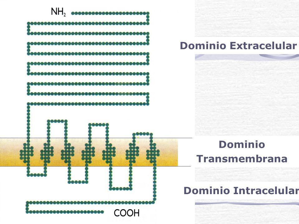 Dominio Transmembrana