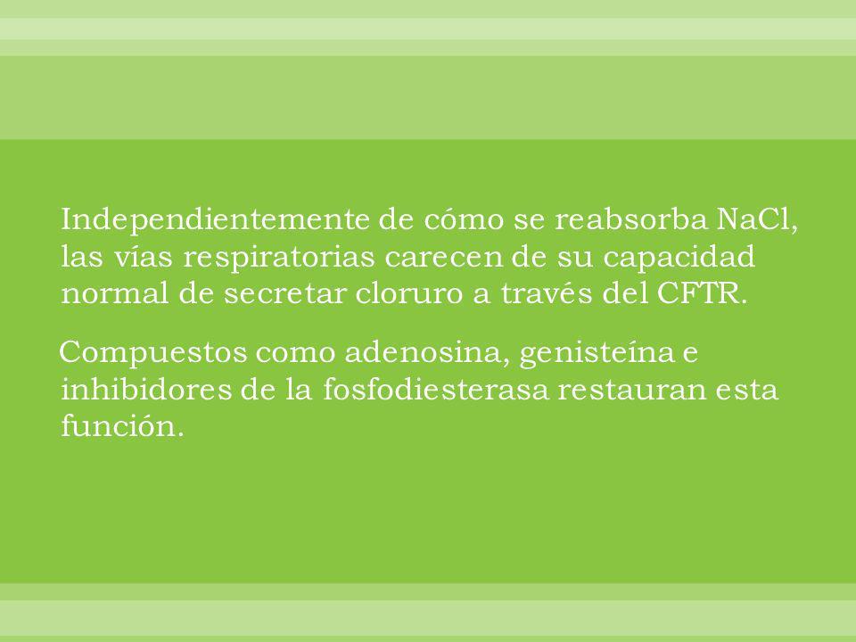 Independientemente de cómo se reabsorba NaCl, las vías respiratorias carecen de su capacidad normal de secretar cloruro a través del CFTR.