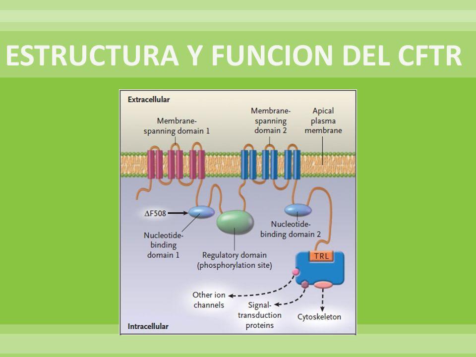 ESTRUCTURA Y FUNCION DEL CFTR