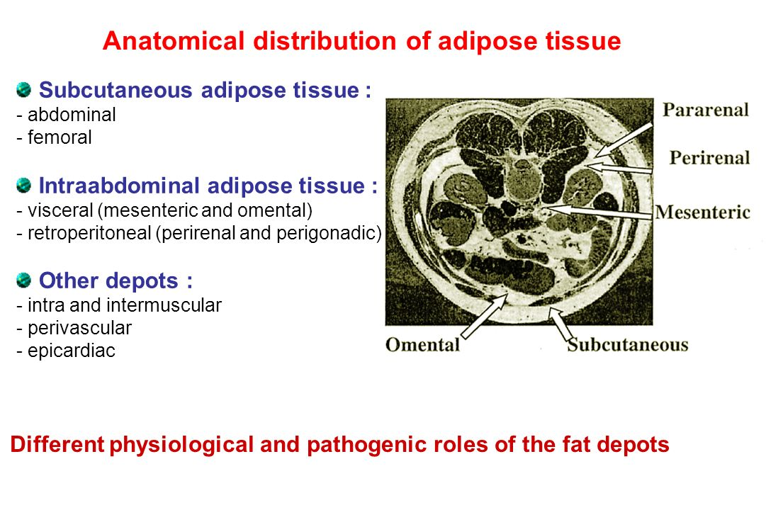 Anatomical distribution of adipose tissue