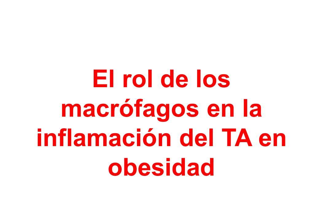 El rol de los macrófagos en la inflamación del TA en obesidad