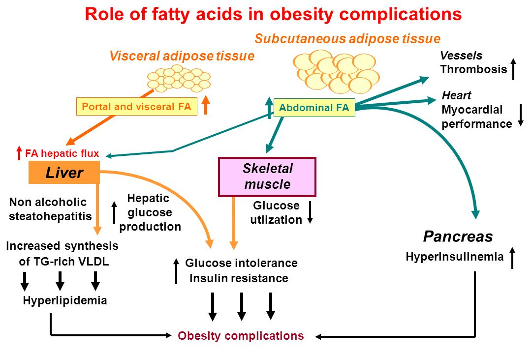 Role of fatty acids in obesity complications