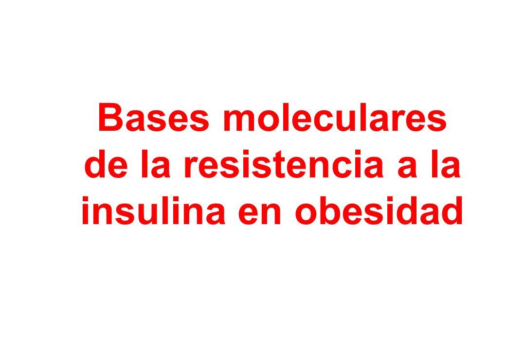 Bases moleculares de la resistencia a la insulina en obesidad