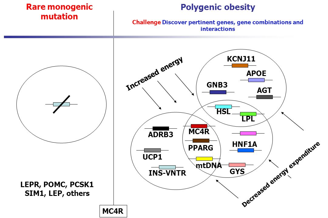 Polygenic obesity Rare monogenic mutation KCNJ11 Increased energy APOE
