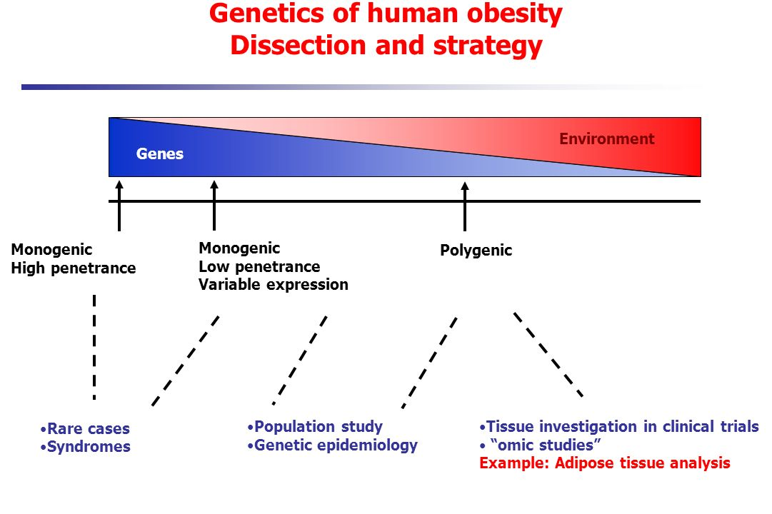 Genetics of human obesity Dissection and strategy