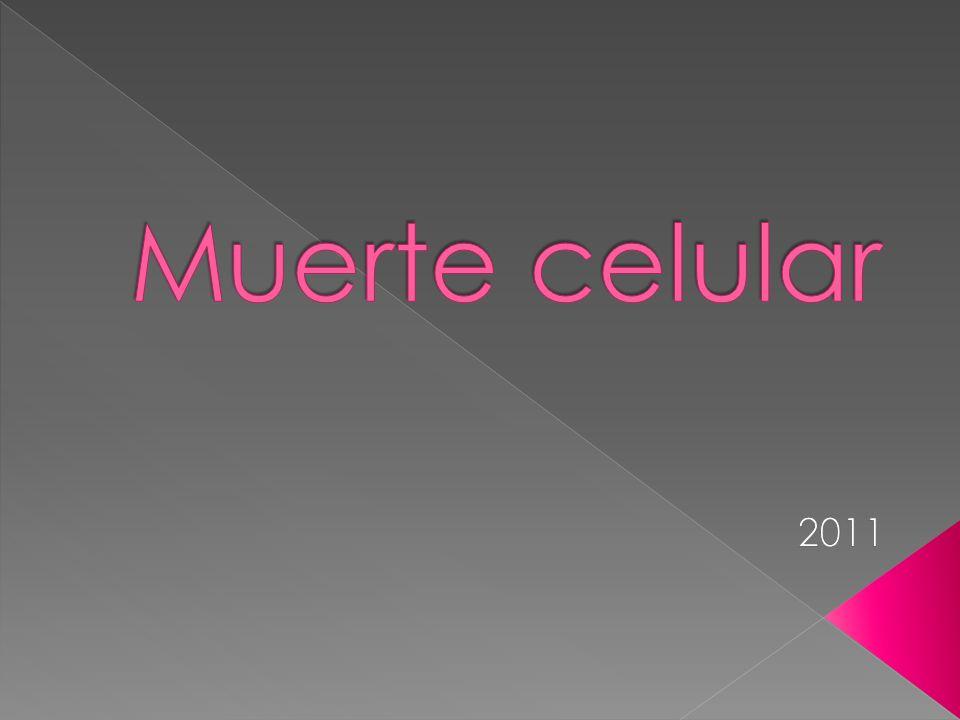 Muerte celular 2011
