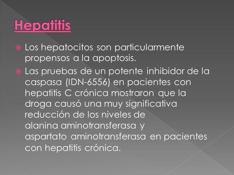 HepatitisLos hepatocitos son particularmente propensos a la apoptosis.