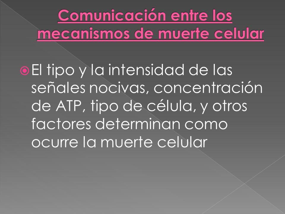 El tipo y la intensidad de las señales nocivas, concentración de ATP, tipo de célula, y otros factores determinan como ocurre la muerte celular
