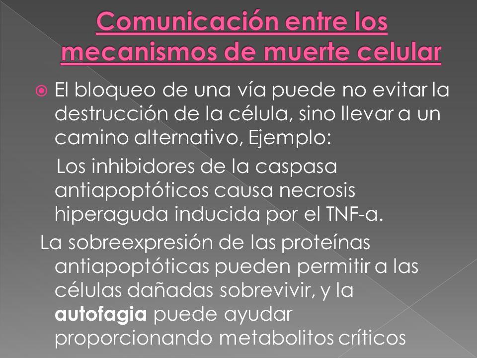 Comunicación entre los mecanismos de muerte celular