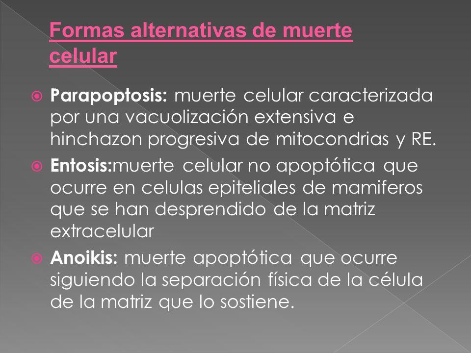 Formas alternativas de muerte celular