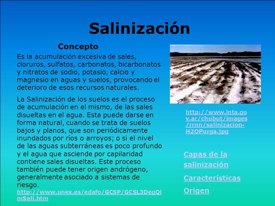 Salinización Concepto Capas de la salinización Características Origen