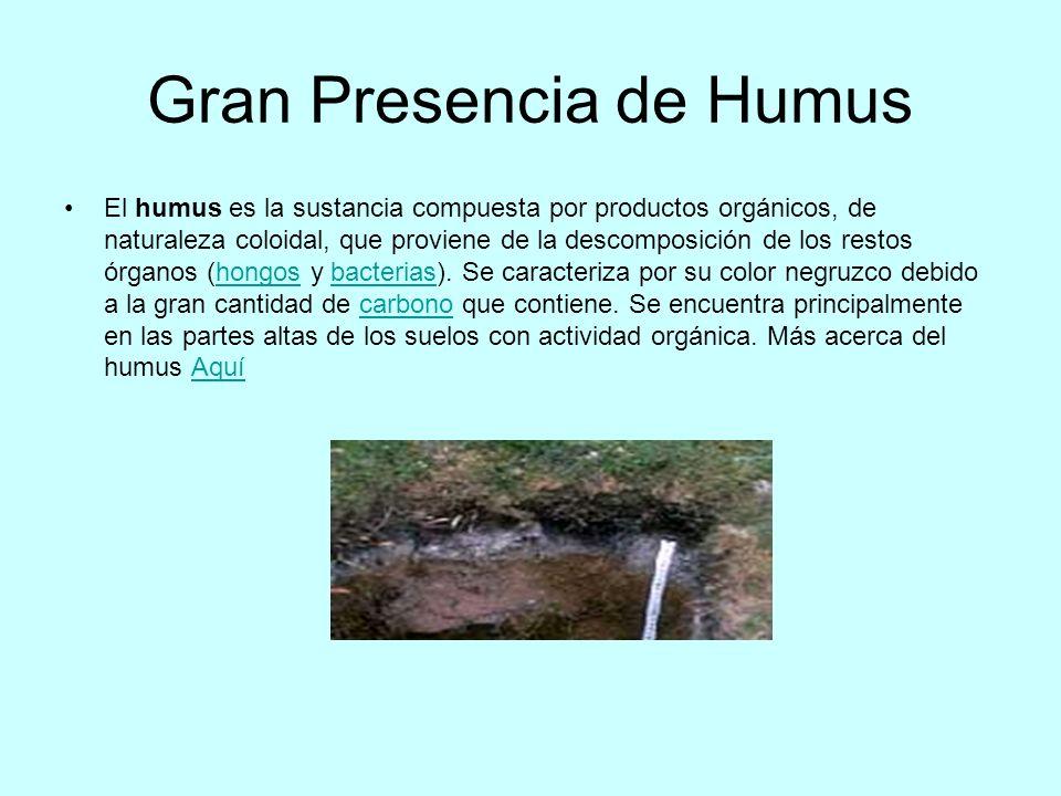 Gran Presencia de Humus