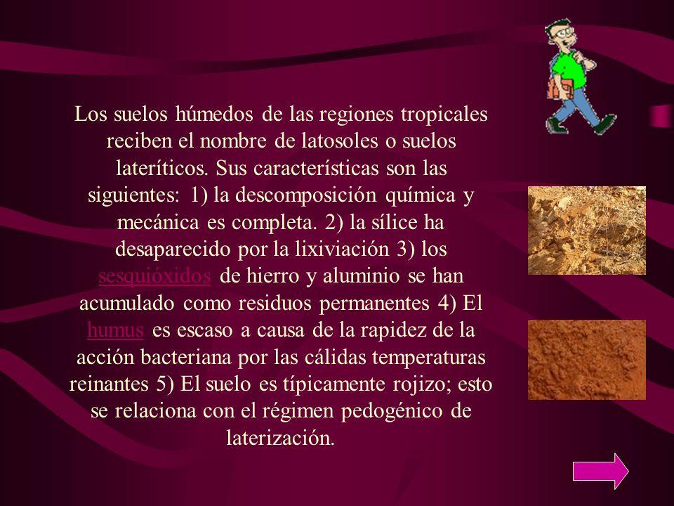 Los suelos húmedos de las regiones tropicales reciben el nombre de latosoles o suelos lateríticos.