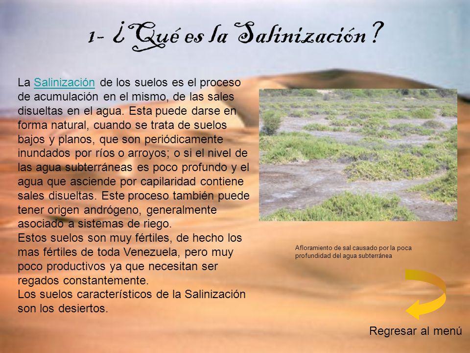 1- ¿Qué es la Salinización