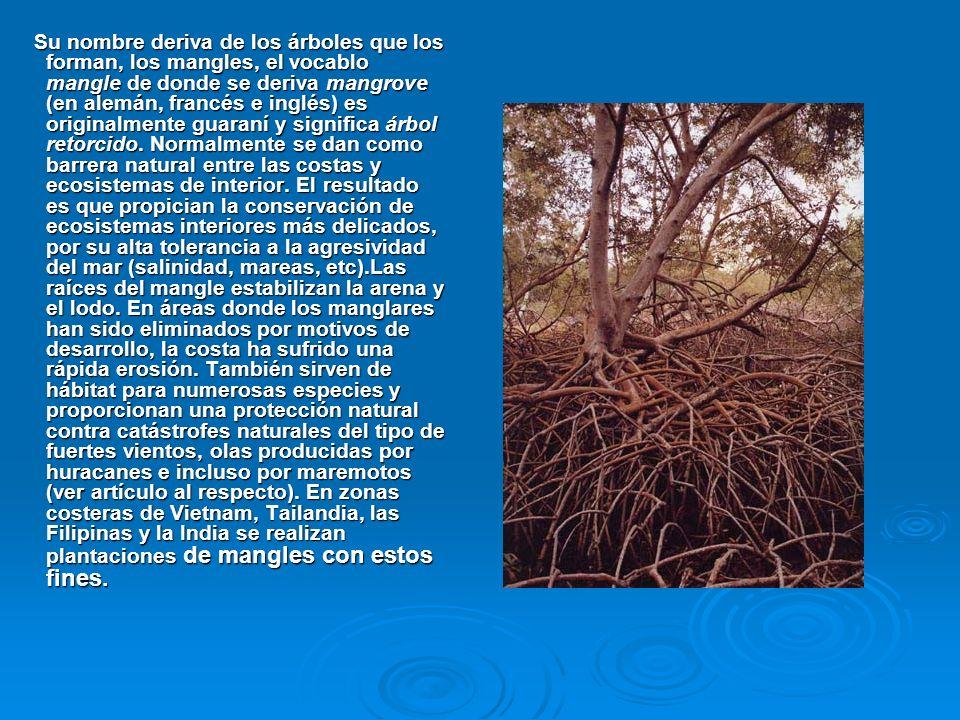 Su nombre deriva de los árboles que los forman, los mangles, el vocablo mangle de donde se deriva mangrove (en alemán, francés e inglés) es originalmente guaraní y significa árbol retorcido.
