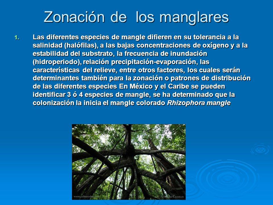 Zonación de los manglares