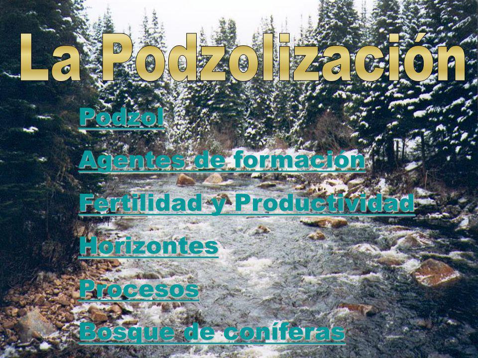 La Podzolización Podzol. Agentes de formación. Fertilidad y Productividad. Horizontes. Procesos.