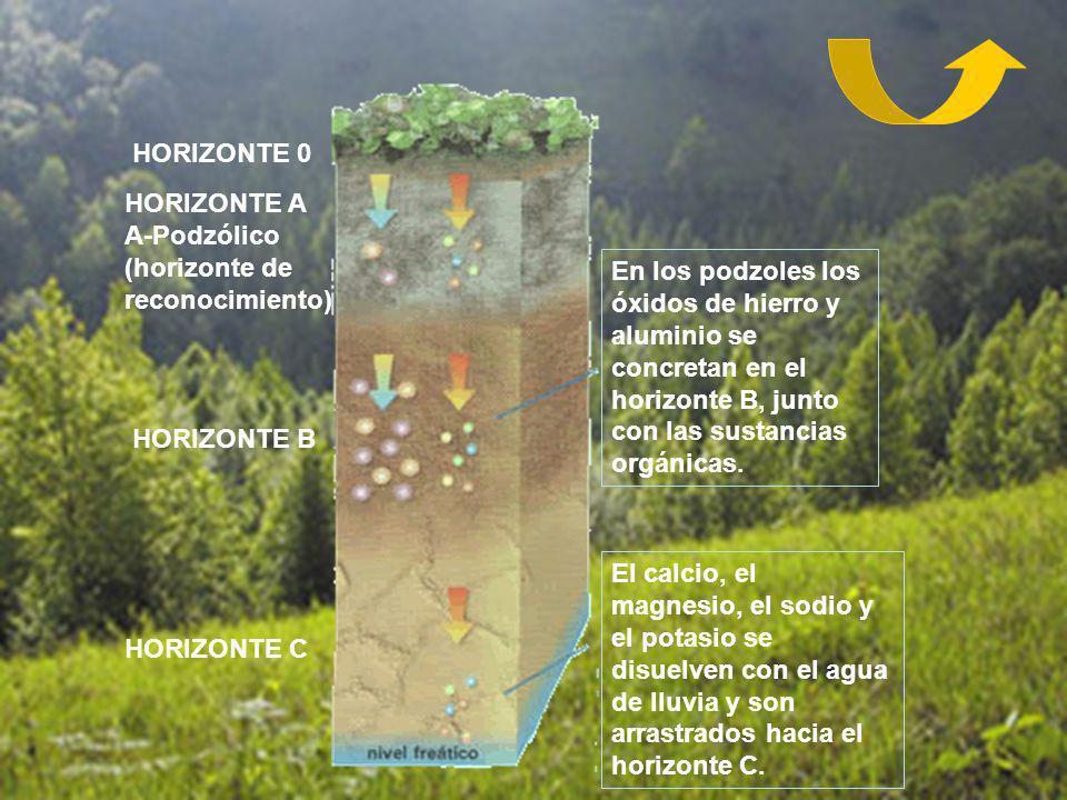 HORIZONTE 0 HORIZONTE A A-Podzólico (horizonte de reconocimiento)